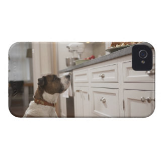 Dog in kitchen looking at food on counter iPhone 4 covers