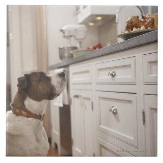 Dog in kitchen looking at food on counter tile