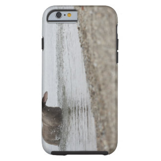 Dog in Lake Shaking Off Water Tough iPhone 6 Case