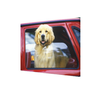 Dog in red car window canvas print