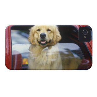 Dog in red car window iPhone 4 Case-Mate cases