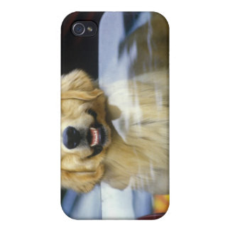 Dog in red car window iPhone 4/4S covers