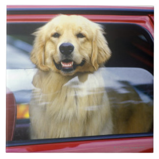 Dog in red car window large square tile