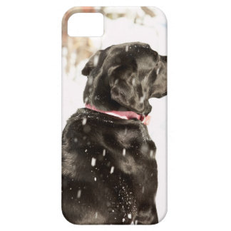 Dog in snow case for the iPhone 5