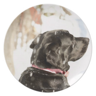 Dog in snow plate
