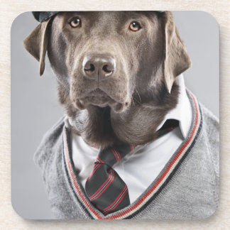 Dog in sweater and cap coaster