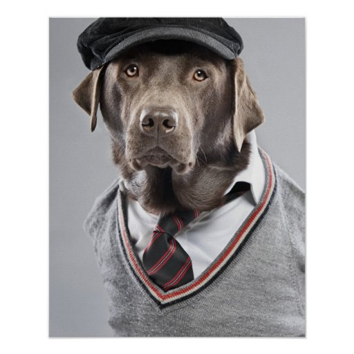 Dog in sweater and cap print
