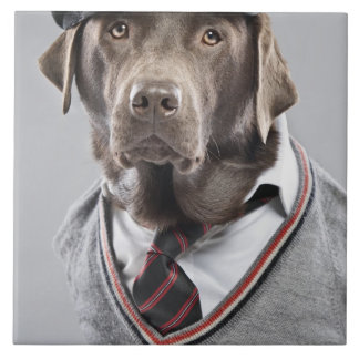 Dog in sweater and cap tile