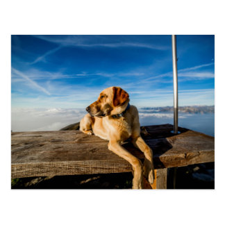 Dog in the Nature Postcard