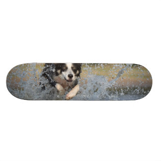 Dog in the Water 19.7 Cm Skateboard Deck