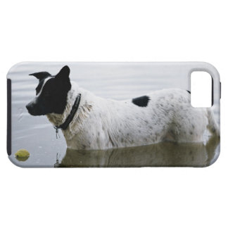 Dog in Water with Tennis Ball Case For The iPhone 5
