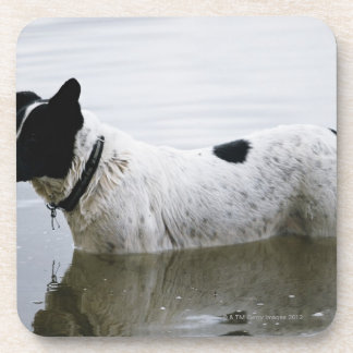 Dog in Water with Tennis Ball Drink Coasters