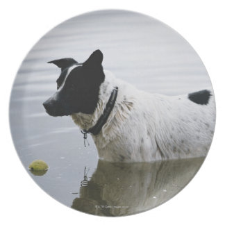 Dog in Water with Tennis Ball Plate