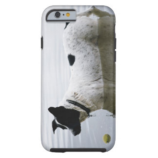 Dog in Water with Tennis Ball Tough iPhone 6 Case