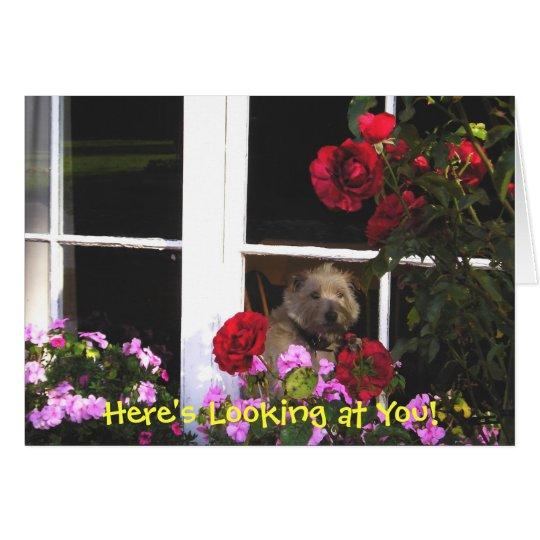 Dog in Window Irish Proverb Card