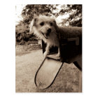 Dog Inside a Mailbox Postcard