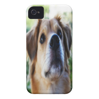 Dog iPhone 4 cover (HD)