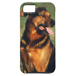 dog iPhone 5 covers