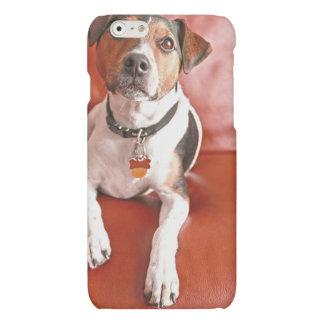 dog iPhone 6 plus case