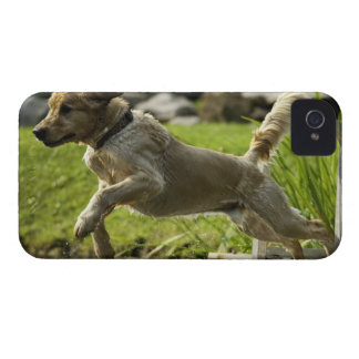 Dog jumps into pond Case-Mate iPhone 4 case