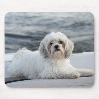 Dog laying by the water mouse pad