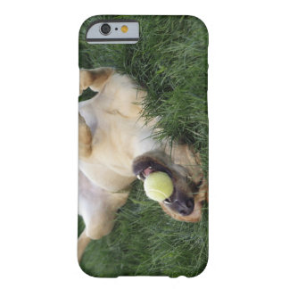 Dog laying upside down in grass with tennis ball barely there iPhone 6 case