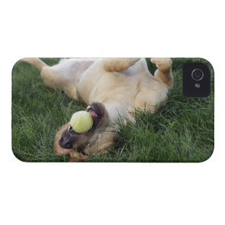 Dog laying upside down in grass with tennis ball iPhone 4 covers