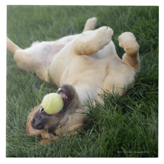 Dog laying upside down in grass with tennis ball large square tile