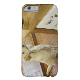 Dog looking at food on table. barely there iPhone 6 case