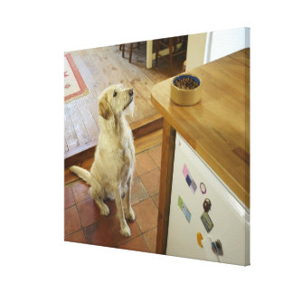 Dog looking at food on table. canvas print