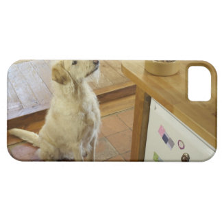 Dog looking at food on table. case for the iPhone 5