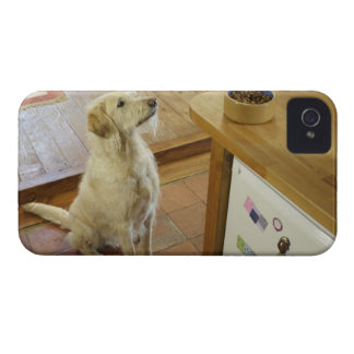 Dog looking at food on table. iPhone 4 covers