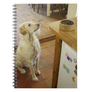 Dog looking at food on table. spiral notebook