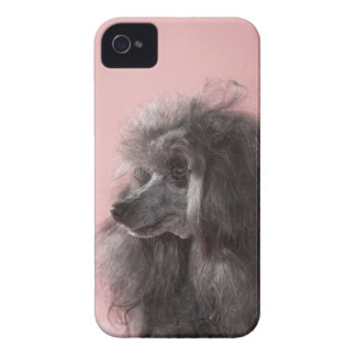 Dog looking away iPhone 4 case