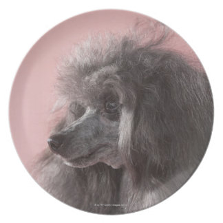 Dog looking away plate