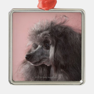 Dog looking away Silver-Colored square decoration