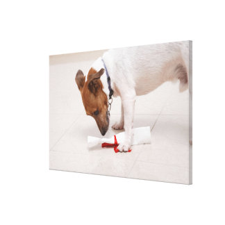 Dog looking down a diploma canvas print