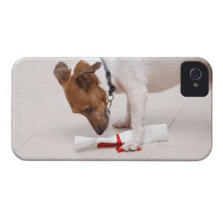 Dog looking down a diploma iPhone 4 covers