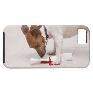 Dog looking down a diploma iPhone 5 cover