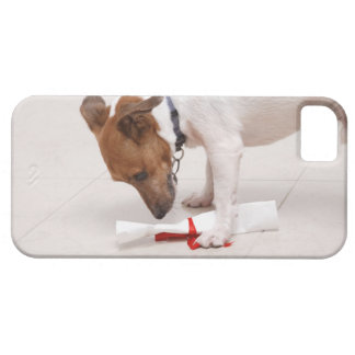 Dog looking down a diploma iPhone 5 covers