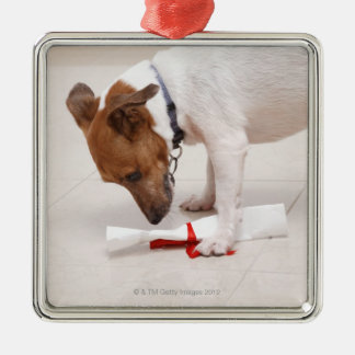 Dog looking down a diploma Silver-Colored square decoration