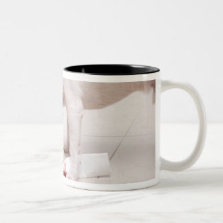 Dog looking down a diploma Two-Tone coffee mug