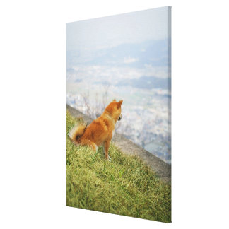Dog looking down from on hill canvas print