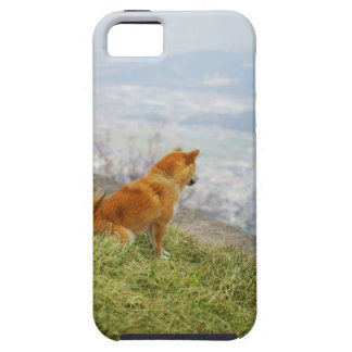 Dog looking down from on hill iPhone 5 cover