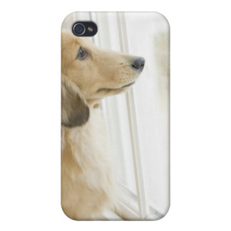Dog looking out window iPhone 4/4S case