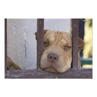Dog looking through a gate, Valparaiso, Photo Art