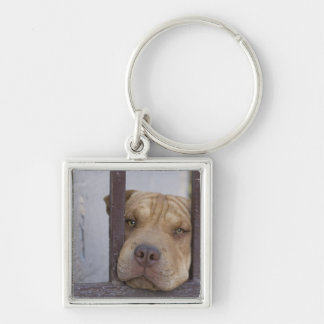 Dog looking through a gate, Valparaiso, Silver-Colored Square Key Ring