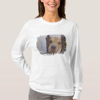 Dog looking through a gate, Valparaiso, T-Shirt