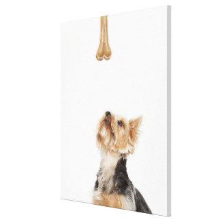 Dog looking up at bone canvas print