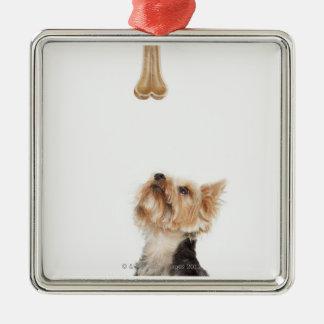 Dog looking up at bone christmas ornament